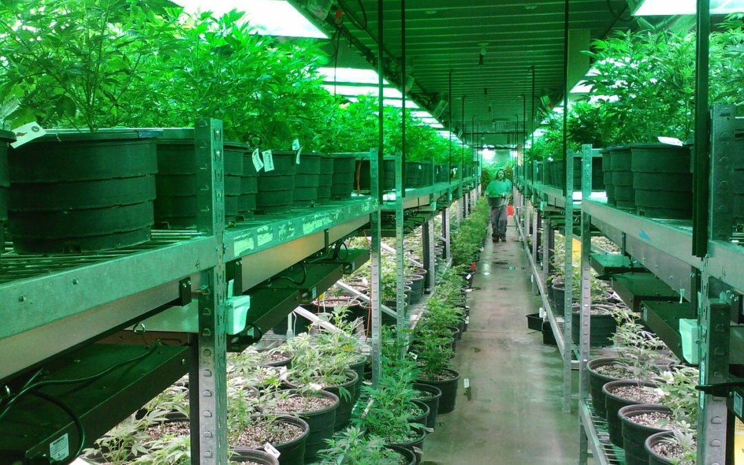 Automated Solutions for Your Cannabis Business